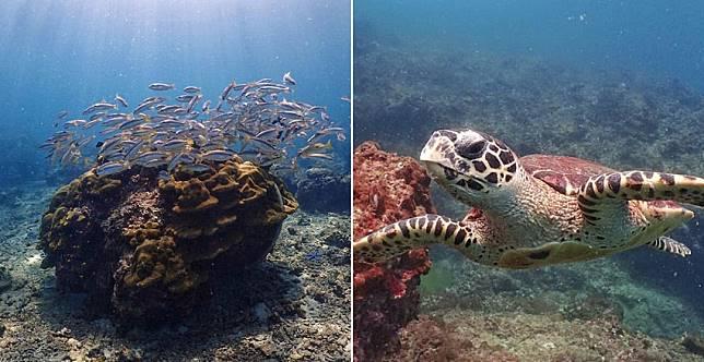 拍魚拍海龜拍珊瑚都好看,網友好評推薦5款防水相機