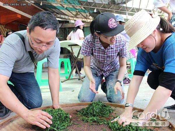 坪林輕旅行一日遊共有8條茶旅路線,安排逛街、品茶、製茶、封茶與茶染等活動(圖/新北市政府 提供)