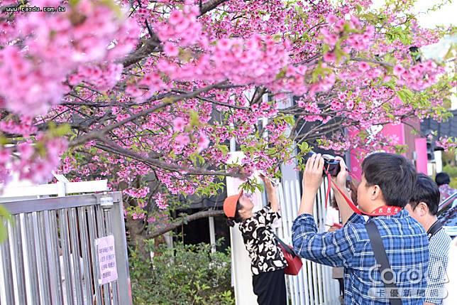 趁著228連假到山上欣賞盛開櫻花,或到海邊看潮汐,盡情舒展受疫情桎梏的身心靈(圖/卡優新聞網)