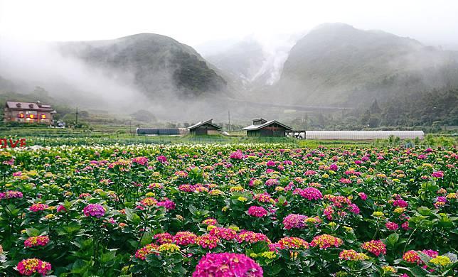 04_繡球花季